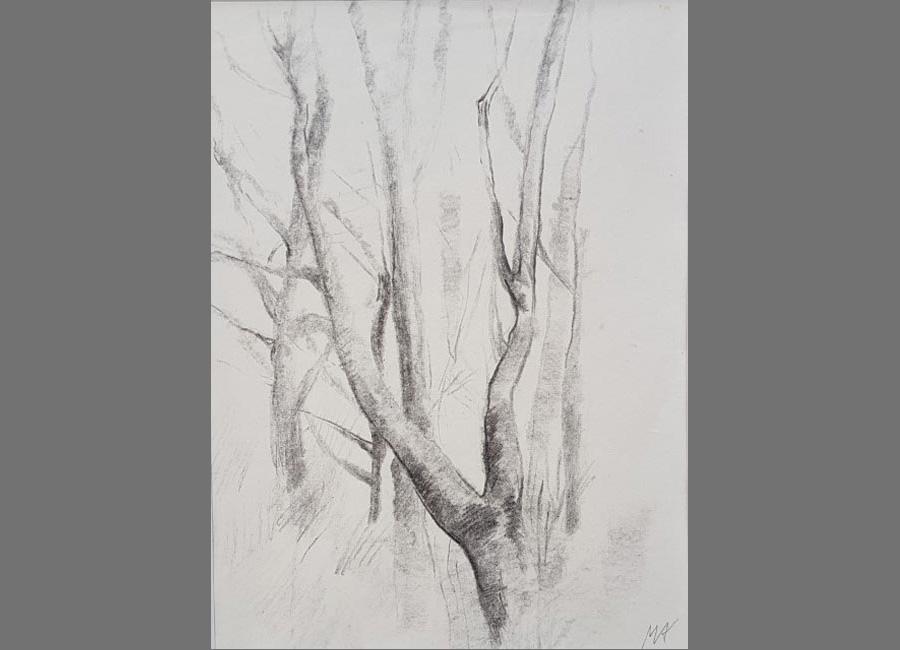 Bäume-I.-Kohle,-19x14cm