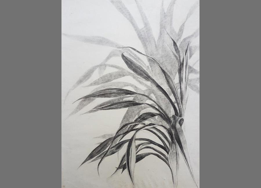 Zimmerpflanze, Kohle, 62x48cm