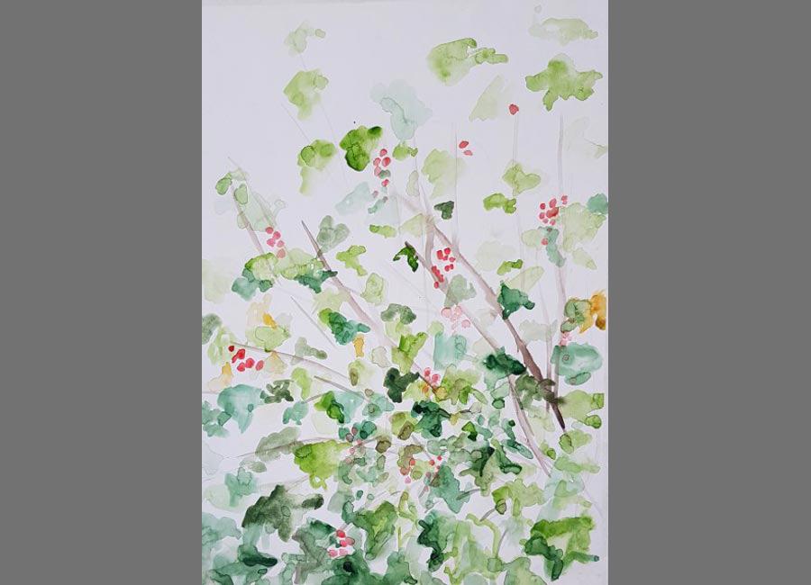 Ribiselbusch,-Aquarell,-48x34cm