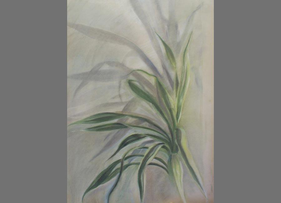 Zimmerpflanze,-Pastell,-62x48cm